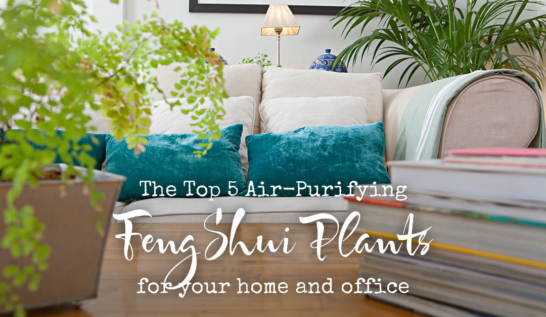 The best Feng Shui plants for your Home